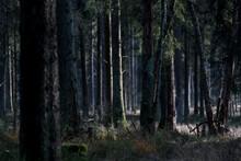 A Pristine Forest In Autumn