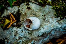 White Snail Shell