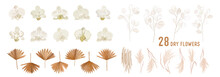 Dried Lunaria Flowers, Orchid, Pampas Grass, Tropical Palm Leaves Vector Bouquets. Pastel Watercolor Floral