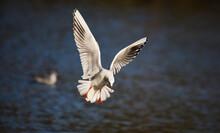 Beauty Of Flying Bird