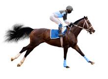 Horse Jockey Jump Isolated On ...