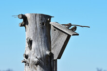 Sparrows On Birdhouse