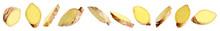Set Of Fresh Ginger Slices On White Background. Banner Design