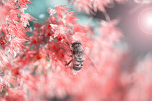 Bee Pollinating Beautiful Pink...