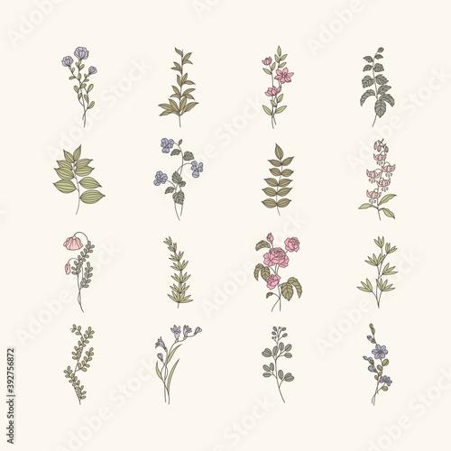 Papel de parede Botanical floral mockup illustration