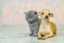 A Cute Little Gray Kitten Sits On The Floor Next To A Sad And Unhappy Toy Terrier Puppy At Home Against The Background Of Lights And Looks To The Side