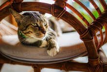 Closeup Of Adorable Striped Gray Cat On Chair