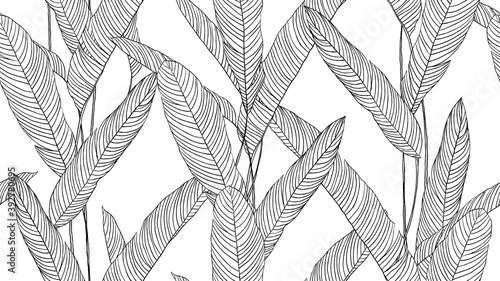Botanical seamless pattern, hand drawn line art tropical plant on white - fototapety na wymiar
