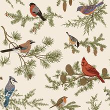 Vintage Vector Seamless Pattern. Winter Birds. Botanical Illustrations. Tit, Robin, Jay, Blue Jay, Bullfinch, Bluebird, Red Cardinal..