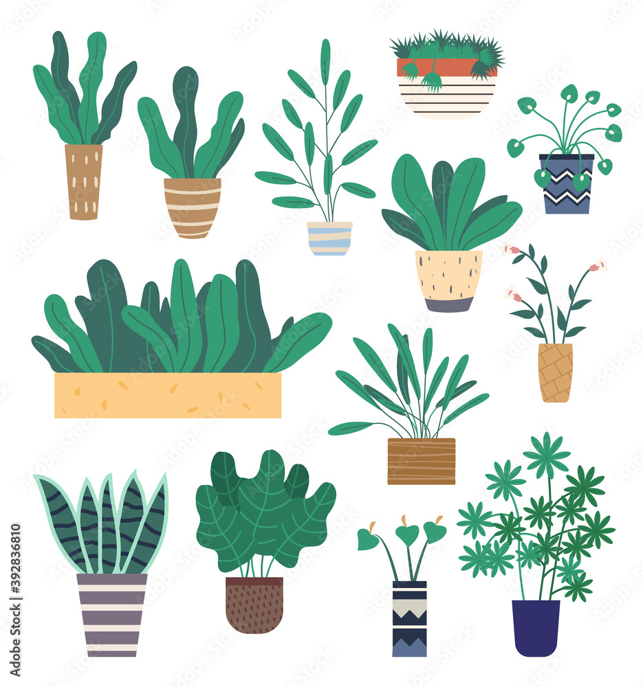 Fototapeta Set of green indoor houseplants and flowers in pots icons on white. Plants growing in pots or planters. Collection of beautiful natural home and office decorations. Trendy vector in flat cartoon style