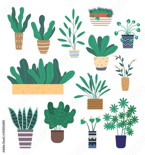 Set of green indoor houseplants and flowers in pots icons on white. Plants growing in pots or planters. Collection of beautiful natural home and office decorations. Trendy vector in flat cartoon style