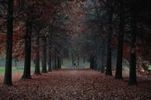 Strada Immersa Nel Parco Con P...