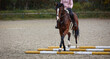 Horse brown under the rider during pole training on the riding arena..