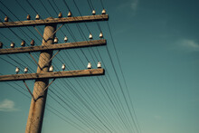 Wood Pole And Crossarms Support Electrical Wires In Rural Setting