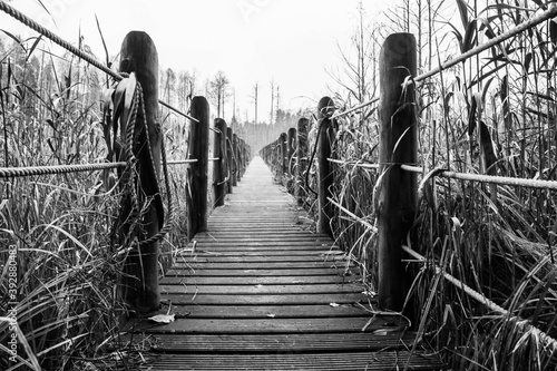 a wooden footbridge stretched between the autumn swamps on a gloomy day Fototapet