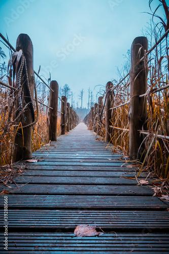 a wooden footbridge stretched between the autumn swamps on a gloomy day Tapéta, Fotótapéta