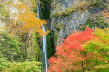 紅葉した井倉峡の絹掛の滝