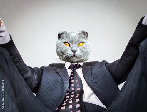 Homme en costume assis avec tête de chat Wallpaper Mural