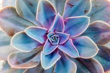 Succulent Plant Pattern Backgr...