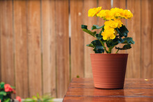 Little Plant With Yellow Flowe...