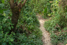 A Trail In The Community Of Lo...