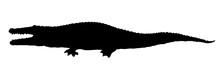 Crocodile. Vector Drawing Icon Sign
