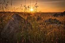 Beautiful Dusk In The Field With Grass And Rocks