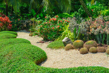 Cactus Garden, Decorated With ...