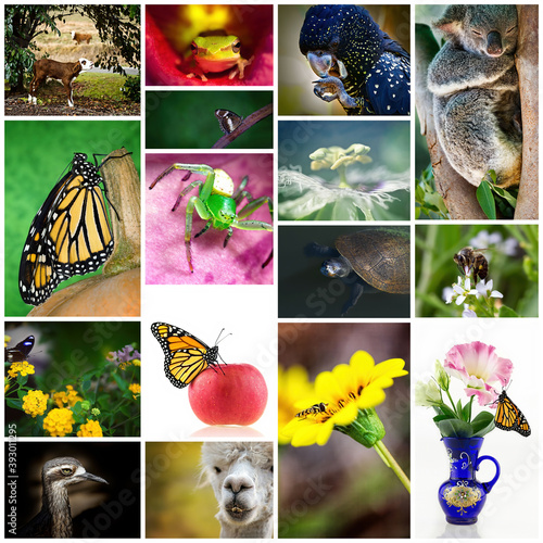 Fototapeta premium Collage Of Australian Flora And Fauna