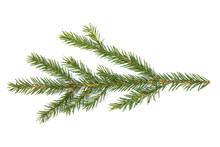 Fir Tree Branch On White
