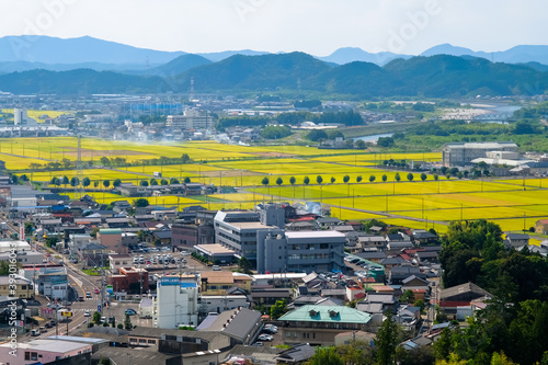Fototapeta 岐阜県 美濃市 小倉公園展望台からの眺め