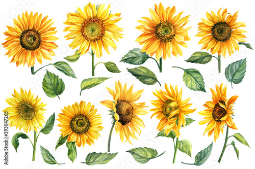 Obraz na plátně Set of watercolor bright yellow, sunflowers hand-drawn