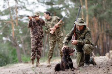Hunter Pets Brown Pointer Gun ...