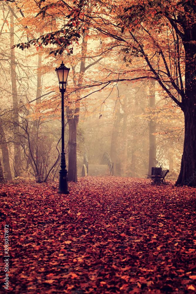 Fototapeta Poranek w jesiennym parku