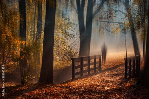 Fototapeta Jesienny poranek obraz