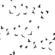 Seamless pattern flock of flying birds isolated on white background. Vector