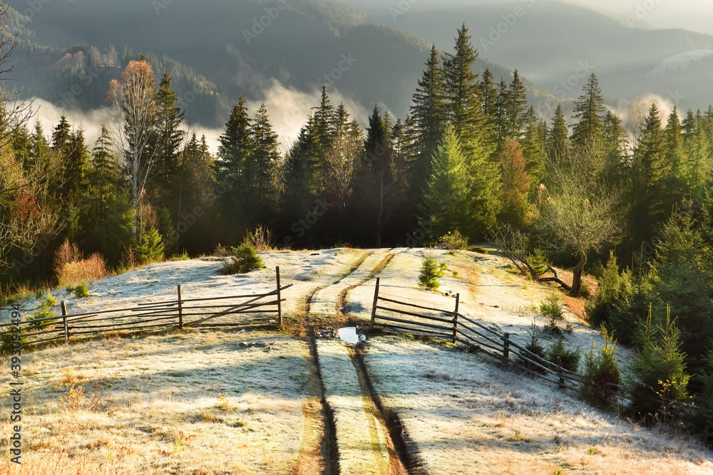 Fototapeta  An early frosty late autumn morning in the mountains. Dirt road going through green hills and spruce forest. The grass is frosty and the freshness of a frosty morning.