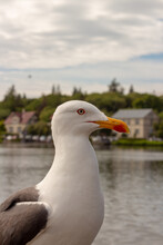 Close Up Sideview Of A Seagull On A Bright Day, Close To A Small Pond