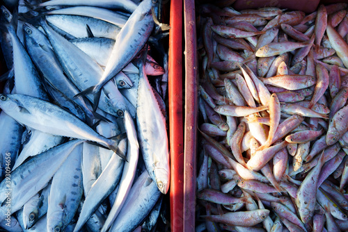 fish freshly caught Fototapeta
