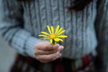 黄色い花を差し出す少...