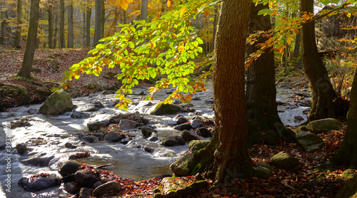 Fotografia Beautiful autumn forest with a river creek flowing over wet irregular stones