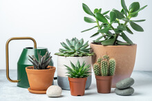 Various Succulents In Pots And...