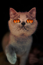 Four Eyes Spooky And Colorful Cat , Perfect For Halloween Or Horror Theme