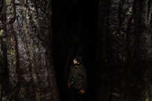 High Angle Of Male Tourist Standing Between Trunks Of Huge Trees In Wet Woods On Overcast Day