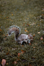 Adorable Little Squirrel With ...