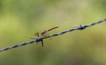 Closeup Shot Of A Dragonfly Pe...