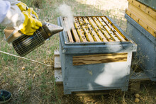 Crop Anonymous Beekeeper In Protective Gloves And Costume Using Bee Smoker In Hive In Apiary