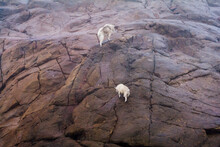 Mountain Goat And Her Kid Climbing Up Steep Rocks