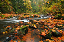 Scenic View Of River Flowing Through Forest In Autumn