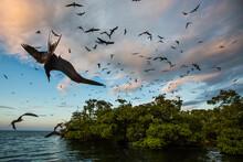 Scenic View Of Birds Flying Mi...